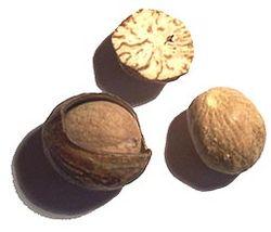 Nutmeg Image