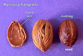 Mace and Nutmeg
