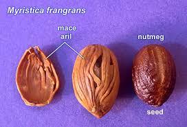 Mace and Nutmeg